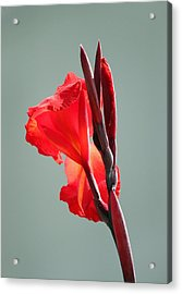 On Fire Acrylic Print by Suzanne Gaff