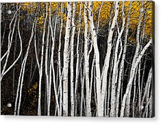 On The Edge Acrylic Print by The Forests Edge Photography - Diane Sandoval