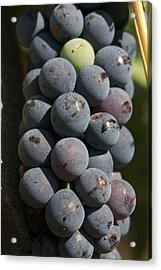 One Green Grape Stands Out In A Bunch Acrylic Print by Heather Perry