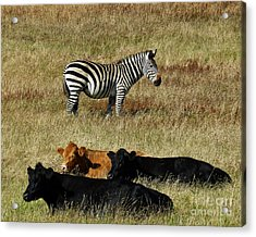 One Is Not Like The Others Acrylic Print by Methune Hively