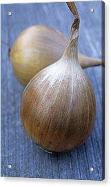 Onion (allium Cepa 'ailsa Craig') Acrylic Print by Maxine Adcock