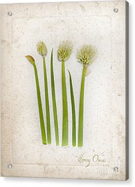 Onion Art Acrylic Print by Linde Townsend