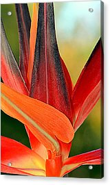 Only In Paradise...... Acrylic Print by Tanya Tanski