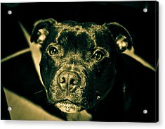 Onyx Acrylic Print by Robby Green