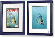 Open Water Crappie Acrylic Print by JQ Licensing