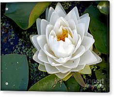 Optical Illusion In A Waterlily Acrylic Print by Kaye Menner