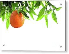 Orange Branch Acrylic Print by Carlos Caetano