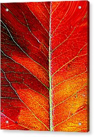 Orange In Autumn.... Acrylic Print by Tanya Tanski