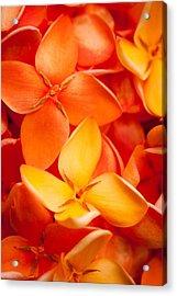 Orange Jungle Flame Flower Acrylic Print by Johan Larson