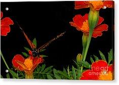 Orange On Orange Acrylic Print by Lydia Holly