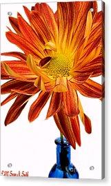 Orange You Happy Acrylic Print by Susan Smith