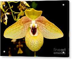 Orchid 23 Acrylic Print by Terry Elniski