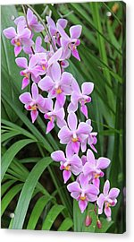 Orchids 15 Acrylic Print by Becky Lodes