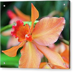 Orchids 25 Acrylic Print by Becky Lodes