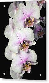 Orchids Acrylic Print by David Chapman