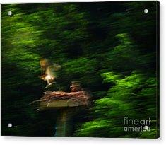 Osprey Motion Acrylic Print by Rrrose Pix