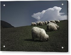 Our White Coat Acrylic Print by Fernando Alvarez