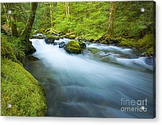 Out Of The Rainforest Acrylic Print by Mike  Dawson
