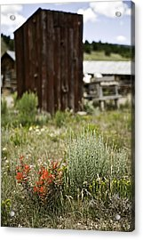 Outhouse Path Acrylic Print by Melany Sarafis