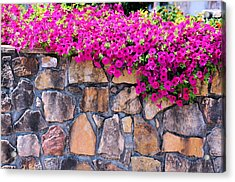 Over The Wall Acrylic Print by Jan Amiss Photography