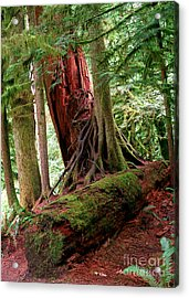 Pacific Rim National Park 9 Acrylic Print by Terry Elniski