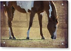 Paint Horse Acrylic Print by Betty LaRue
