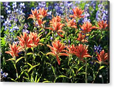 Paintbrushes Wildflowers Rainier National Park Acrylic Print by Pierre Leclerc Photography