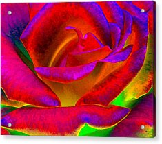 Painted Rose 1 Acrylic Print by Will Borden