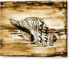 Painted Seashell Acrylic Print by Marsha Heiken