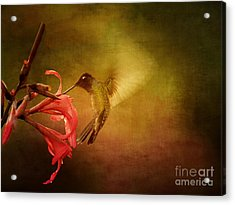 Painterly Hummingbird #2 Acrylic Print by Anne Rodkin