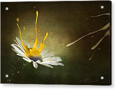 Painting Daisy Acrylic Print by Svetlana Sewell