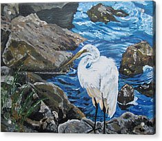 Painting  Sharon's Heron On The Rocks Acrylic Print by Judy Via-Wolff