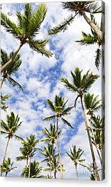 Palm Trees Acrylic Print by Elena Elisseeva