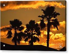 Palm Trees In Sunrise Acrylic Print by Susanne Van Hulst