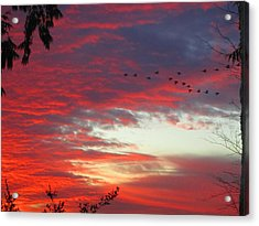 Papaya Colored Sunset With Geese Acrylic Print by Kym Backland