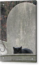 Paris Cemetery - Pere La Chaise - Black Cat On Gravestone - Le Chat Noir Acrylic Print by Kathy Fornal
