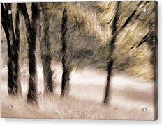 Passing By Trees Acrylic Print by Carol Leigh