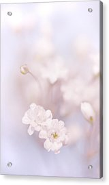 Passion For Flowers. White Pearls Of Gypsophila Acrylic Print by Jenny Rainbow