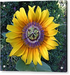 Passion For The Sun Acrylic Print by Eric Kempson