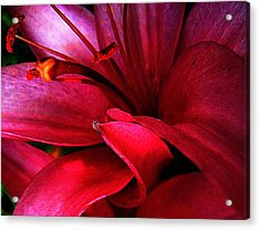 Passionate Lily Acrylic Print by Shirley Sirois