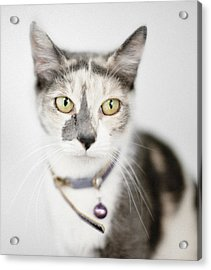 Pastel Calico Cat With Large Yellow Eyes Acrylic Print by Roz Todaro