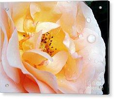 Pastel Rose Acrylic Print by Kaye Menner