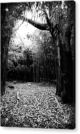 Patch Of Light Acrylic Print by John Rizzuto