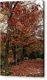 Path Of Leaves Acrylic Print by John Rizzuto