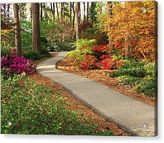 Peaceful Path Acrylic Print by Robert Brown