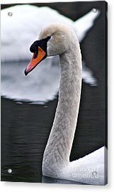 Peaceful Pond Acrylic Print by Eric Chapman