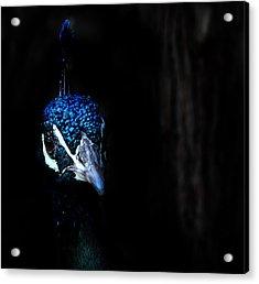 Peacock In The Dark Acrylic Print by Radoslav Nedelchev