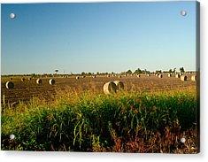 Peanut Bales In Field Acrylic Print by Douglas Barnett