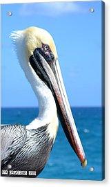 Pelican Acrylic Print by Fern Korn