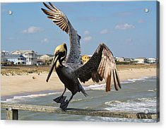 Pelican Landing On The Pier Acrylic Print by Paulette Thomas